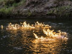 Águas de Pontal: Deputado australiano ateia fogo a rio em denúncia ...