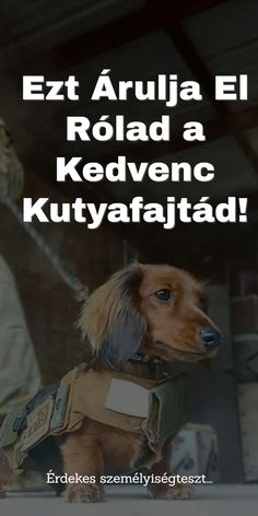 Motivation, Dogs, Animals, Fictional Characters, Animales, Animaux, Pet Dogs, Doggies, Animal