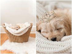 Tamara Jaros Photography 2016 F1 Miniature Goldendoodle Female Breeder: Doodle Country Newborn Puppy Photos