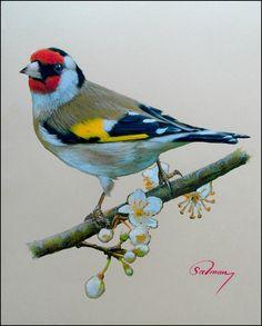 European Goldfinch Watercolor Bird, Watercolor Animals, Exotic Birds, Colorful Birds, Pretty Birds, Beautiful Birds, Australian Birds, Bird Artwork
