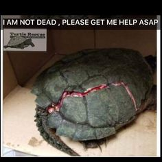 Turtles With Cracked Shells On The Road Need Help — Here's How Turtle Habitat, Emergency Vet, Pet Turtle, The Time Is Now, Save Animals, Animal Control, Wildlife Conservation, Animal Welfare, Beautiful Birds