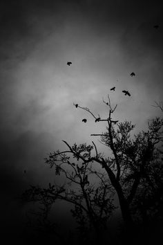 Omens dark black and white photograph of birds and trees