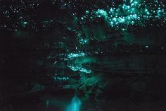 Dark water rafting in New Zealand to see a cave full of glow worms!