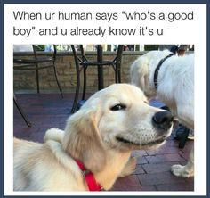 Funny Dogs Memes 28 Funniest Dog Memes - Best Viral Dog Jokes and Pictures - There's nothing a corgi can't fix. Cute Dog Memes, Dog Jokes, Funny Animal Jokes, Funny Animal Pictures, Cute Funny Animals, Funny Memes, Animal Pics, Memes Humor, Animal Quotes