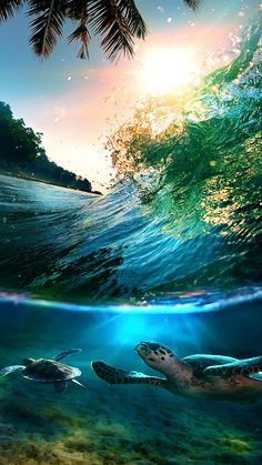 Tropical-Sea-Island-Turtles