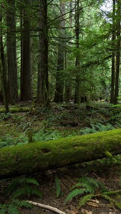 All sizes   forest_trees_nature_84566_640x1136   Flickr - Photo Sharing!