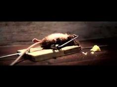 Muis in muizenval (reclame van kaas) - YouTube