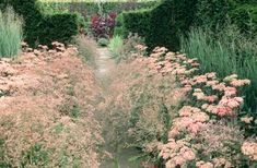 classic English garden, Sedum 'Matrona'-stonecrops, pink, dark leaves, Panicum 'Heavy Metal', ornamental grass, Limonium latifolium-sea lavender, autumn, fall Design: Frank Thuyls, Location: Tuinzondernaam copyright Maayke de Ridder Photography