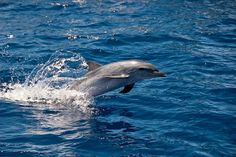 Cheaptrip® - Carpe Diem - Carpe Viam - Экологический тур – Farmstay и бутик отели & наблюдение за китами и дельфинами на Мадейре