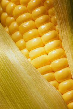 .corn