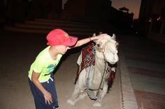 g=dit is de kameel waar je een rondje op mag rijden