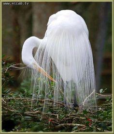 عکسهای هنری و جالب - I have no idea what that says so I say 'beautiful white bird'.