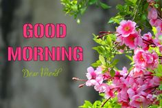 Good Morning Images – Today I am Share With You Latest Free New Good Morning Images , HD Good Morning Photo Pictures , Top Good Morning Images Best Good Morning Images For Whatsaap & Facebook . Good Morning In Hindi, Good Morning Dear Friend, Latest Good Morning Images, Good Morning Photos, Morning Pictures, Good Morning Wishes, Wallpaper Pictures, Photo Wallpaper, Pictures Images