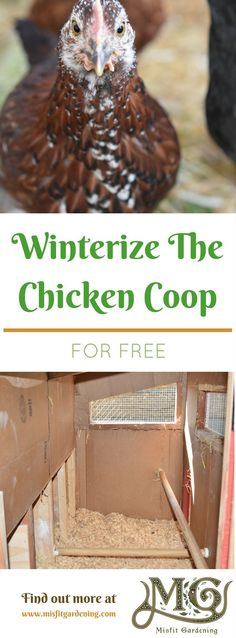 Winterize a chicken coop for free using materials you probably already have. Find out how to winterize your chicken coop step by step. Cheap Chicken Coops, Chicken Barn, Portable Chicken Coop, Best Chicken Coop, Backyard Chicken Coops, Chicken Coop Plans, Building A Chicken Coop, Chickens Backyard, Chicken Ideas
