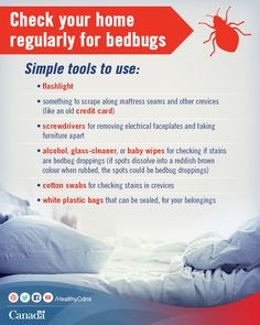 Bedbugs feed on people and pets and can be hard to find. Get tips to prevent and get rid of them here:  http://www.healthycanadians.gc.ca/health-sante/environment-environnement/pesticides/bedbugs-punaises-lits-eng.php?utm_source=pinterest_hcdns&utm_medium=social&utm_content=Sept24_bedbugs_EN&utm_campaign=social_media_14