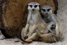 family by Peter Orlický on 500px