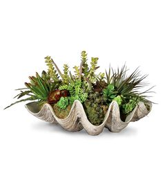 Sea Coast Succulents - A nod to the singular beauty of the sea, the Sea Coast Succulents imparts organic beauty to your dining area, living room, or guest cottage. Thirteen lush succulents and grasses are contained In a vessel that replicates the shape of a large scale clam shell. The virescent coloration of the plants is made all the more vibrant by the neutral tones of the shell.
