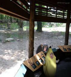 Dieses Kind, das darauf bestanden hat, sein Bananenkostüm im Zoo zu tragen: