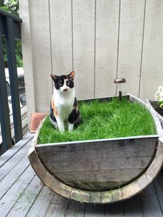 Have indoor cats who love grass? Fill a planter with grass seed and never buy potted grass again!