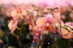 Get ideas for DIY home decor, wedding ideas, gifts and more creative ways to showcase your orchids! Salmon Color, Earthy, Creative, Flowers, Plants, Wedding, Beautiful, Neutral, Shades