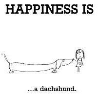 Dachshund, Happy, Dogs, Weenie Dogs, Pet Dogs, Weiner Dogs, Ser Feliz, Doggies, Dachshunds