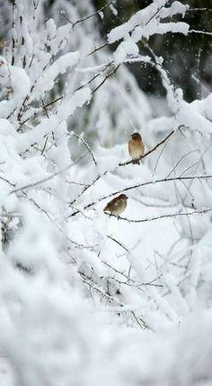 I Love Winter, Winter Snow, Winter Rose, Snow Photography, Winter Scenery, Winter Magic, Winter's Tale, Snowy Day, Snow Scenes