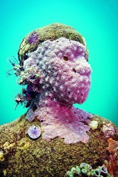 Silent Evolution of a man made reef - Grenada, West Indies