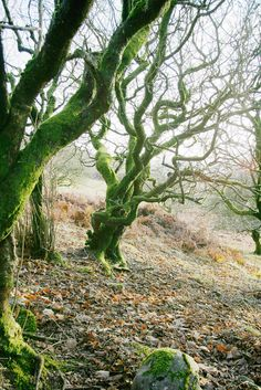 Trees with moss - By Grey Bunny (Benjamin Jones) on flickr