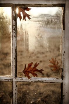 Autumn window with oak leaves.