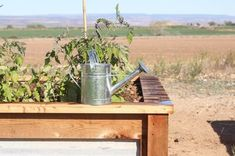 How to Build Raised Garden Beds With Corrugated Metal Metal Raised Garden Beds, Building Raised Garden Beds, Raised Planter, Raised Beds, Raised Gardens, Garden Yard Ideas, Corrugated Metal, Home Landscaping, Carnivorous Plants