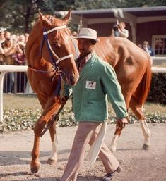 Secretariat - being led by groom Eddie Sweat in the paddock prior to his record-breaking win in the 1973 Belmont Stakes Thoroughbred Horse, Breyer Horses, Clydesdale Horses, Appaloosa Horses, Most Beautiful Animals, Beautiful Horses, Pretty Horses, The Belmont Stakes, The Great Race