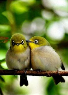 Cute birds on a branch Animal HD desktop wallpaper, Bird wallpaper - Animals no. Cute Birds, Pretty Birds, Small Birds, Little Birds, Colorful Birds, Beautiful Birds, Animals Beautiful, Beautiful Couple, Animals And Pets