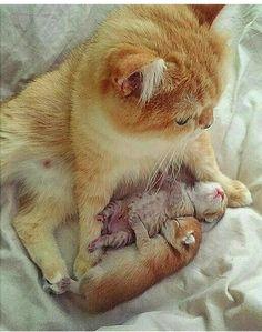 Amo cuidar de meus bebês. Eles não são lindos?