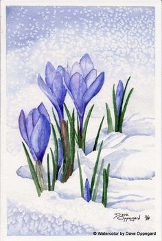 Spring Crocus | Watercolor Art by Dave Oppegard