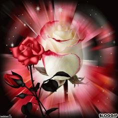 Have a beautiful çiçek gifs Flowers Gif, Beautiful Rose Flowers, Beautiful Gif, Beautiful Flowers, Love You Images, Free To Use Images, Beau Gif, Glitter Graphics, Gif Pictures