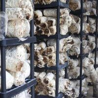 If you have ever wanted to grow mushrooms to save money buying them, you might also consider growing them as a small start-up business. Once you learn the basics of mushroom cultivation, it does not take much more effort or training to grow them in sufficient quantities to market and sell. Because mushrooms remain in high demand and command many...