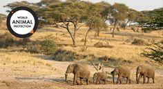 #ABasedeSoja: Deixem os elefantes na natureza!