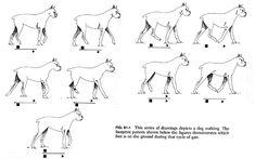 wolf walking - Google 검색