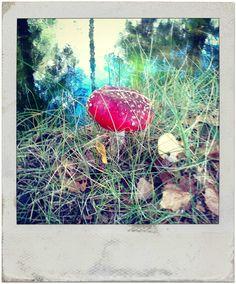 mushroom in Serra da Estrela natural park