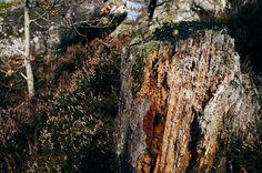 Detailing #forest #trees #nature #termites #details #closeup #nemours #landscape #igersfrance #leica #leicaq #rocks #stones #madeinwetzlar #souche #explore #wander