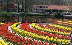 Em 1949 o jardim foi aberto ao público para ajudar os exportadores de flores a mostrar suas plantas híbridas. Ele possui 75.000 tulipas, com algo em torno de 600 variedades.