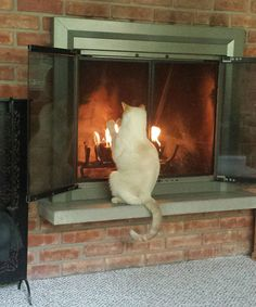 Cats are Addicted to Warmth and These Photos Prove That