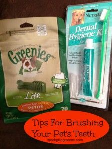 Tips for brushing your pets teeth. These simple tips will help you ease into oral care for your pet! A must read if you are a pet owner.