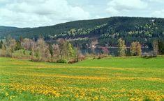Anreise | Weberhof - Ferienwohnungen auf dem Bauernhof in Hinterzarten am Titisee Schwarzwald