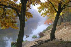 Świder river - fog