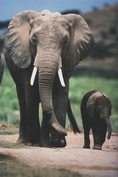 The #elephant march♥