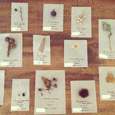 小さな紙の標本たち。