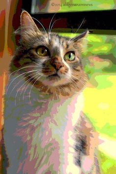 MANX MNEWS: Caturday Art