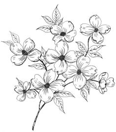 Dogwood Flower Designs Drawings Sketch Coloring Page