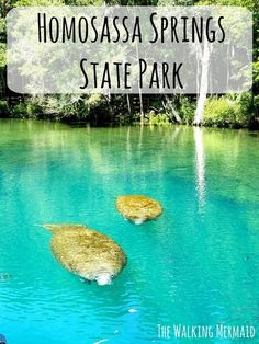 I love going to Homosassa Springs in Florida. It's so beautiful and my family and I had so much fun. So much to do and see.